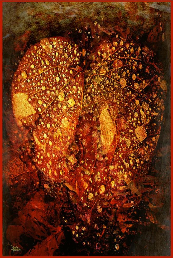 Heart of the Forest - Douglas MooreZart