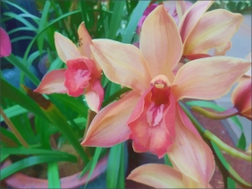 Orchids 6 - Original Art and Fine Art Prints by Douglas MooreZart