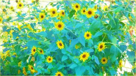 Sunflower Forest - Fine Art Prints - Douglas MooreZart