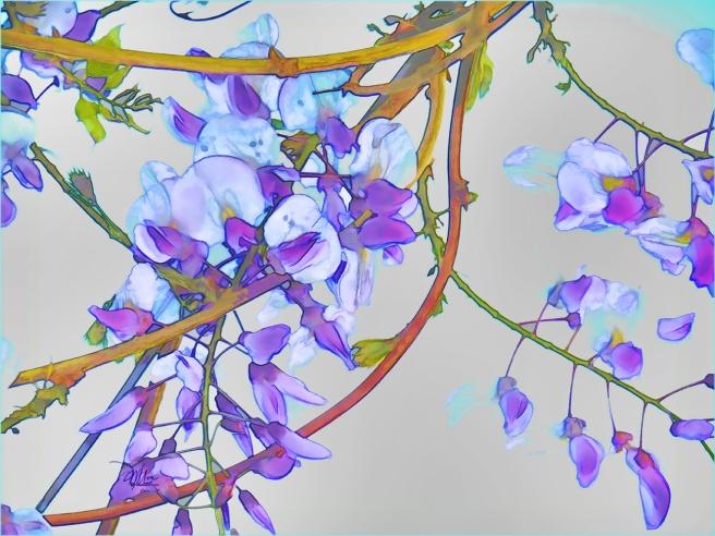 wisteria 300 72 res