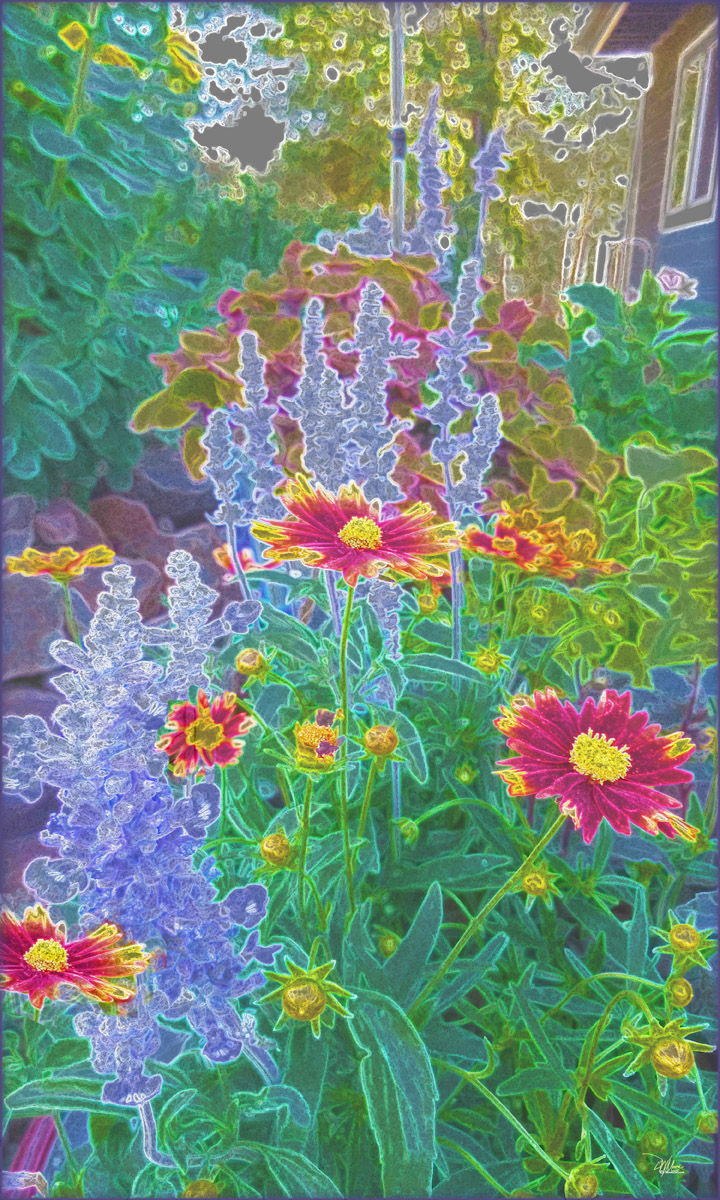 Coreopsis and Salvia 5 72 res