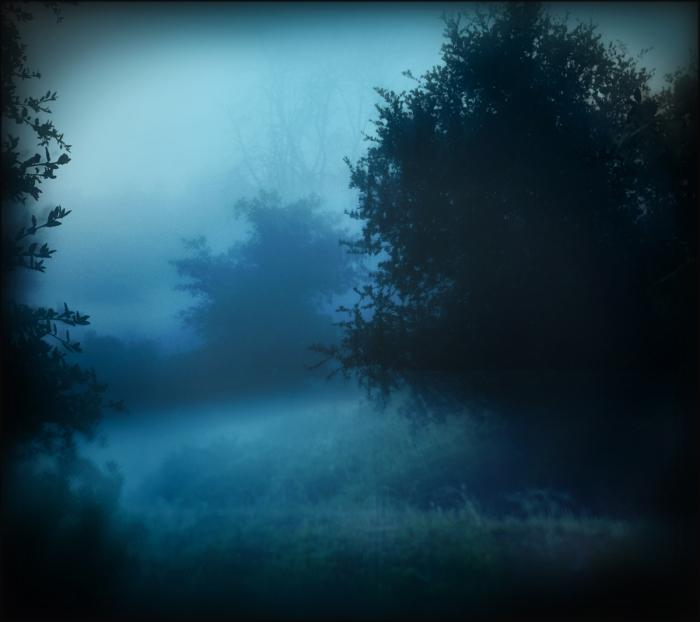 fog FINAL 1200