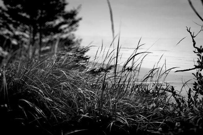 Dune View - D. Moorezart, c 2015