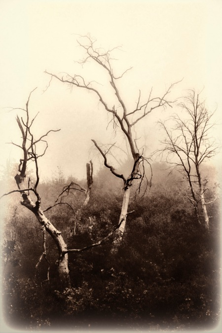 ghost forest 1200