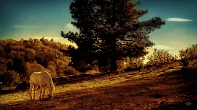 julian-landscape-72-res