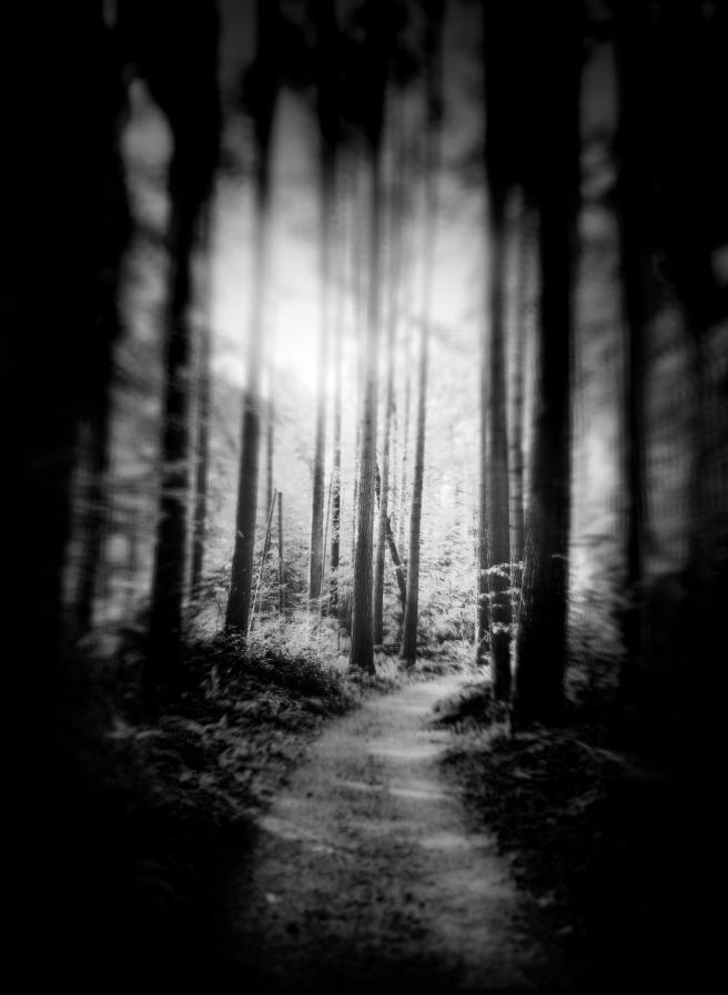 Path - Douglas Moorezart, copyright 2015
