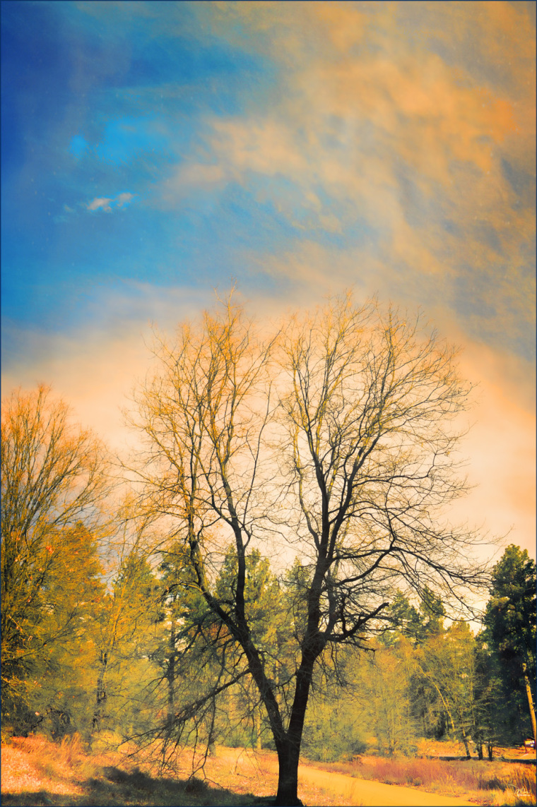 lone-tree-72-res1