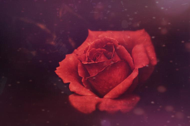 rose99